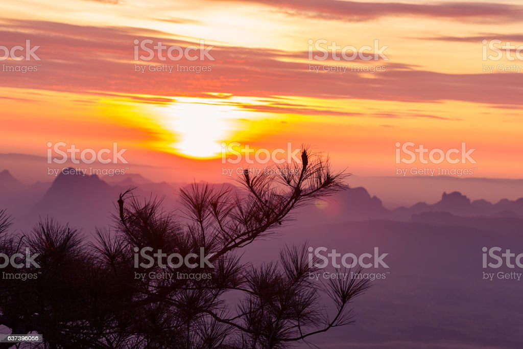 pine branch and sunrise nature background stock photo