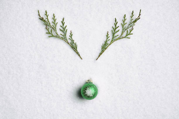 Pine branch green nose reindeer - Christmas Background Nature snow White stock photo