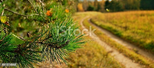 Pine Branch On Background Of Country Road — стоковые фотографии и другие картинки Pinaceae
