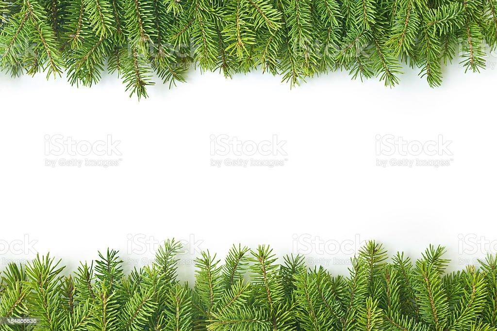 Pine branch royalty-free stock photo
