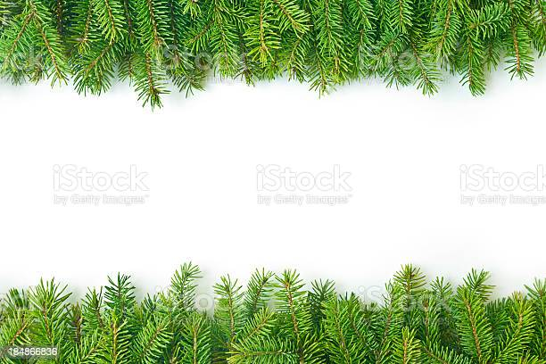 Photo of Pine branch