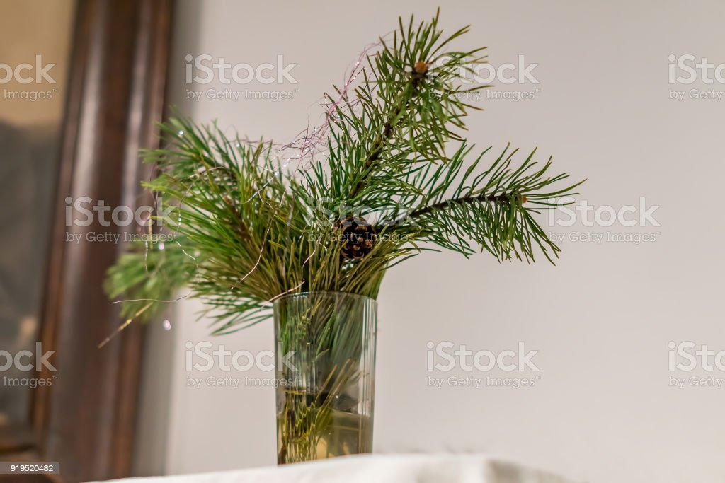 Pine Branches In Vase Interior Decoration Stock Photo More