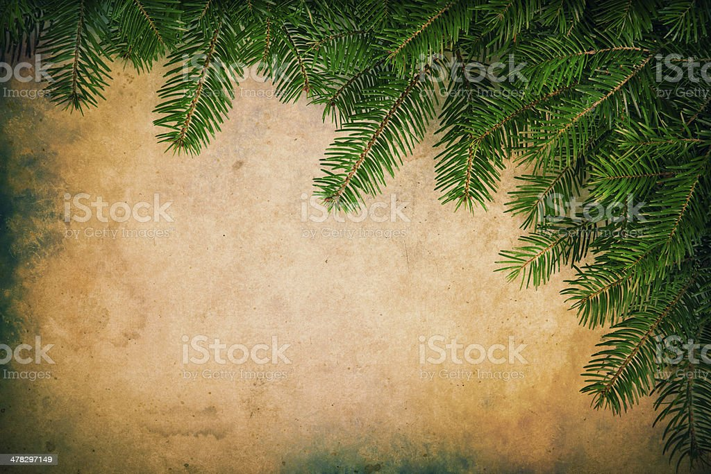 Pine branches on paper background royalty-free stock photo