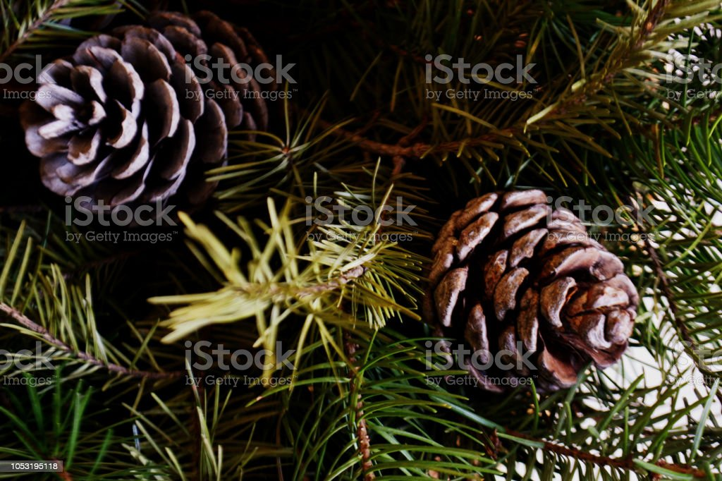 pine branches with pine cones Christmas and new year background
