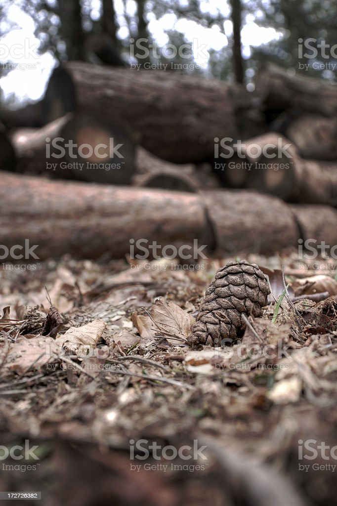 Pine Cone and Log Pile royalty-free stock photo