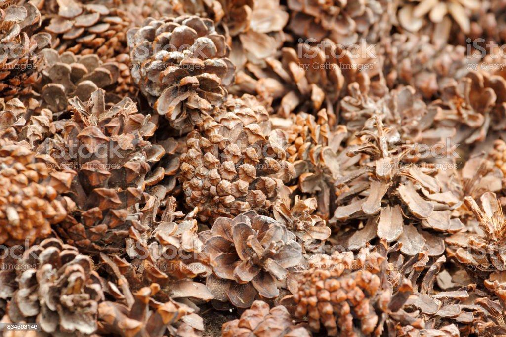 Pine cone background stock photo
