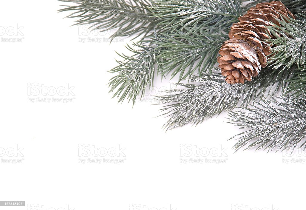 Pine Cone Border royalty-free stock photo