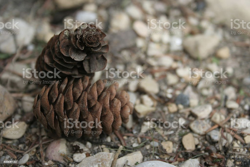 Pine Cone Close-up royalty-free stock photo