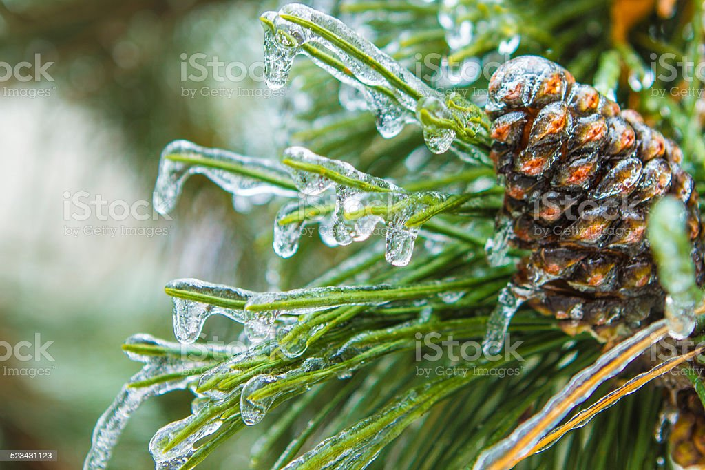 Pine Cone covered in Ice stock photo