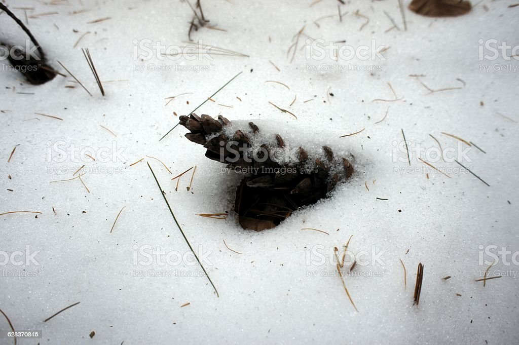 Pine cone covered with snow stock photo