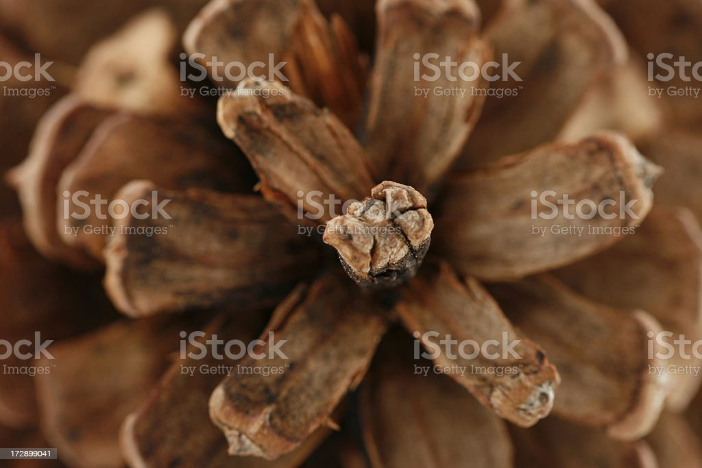Pine Cone Extreme Close-Up stock photo