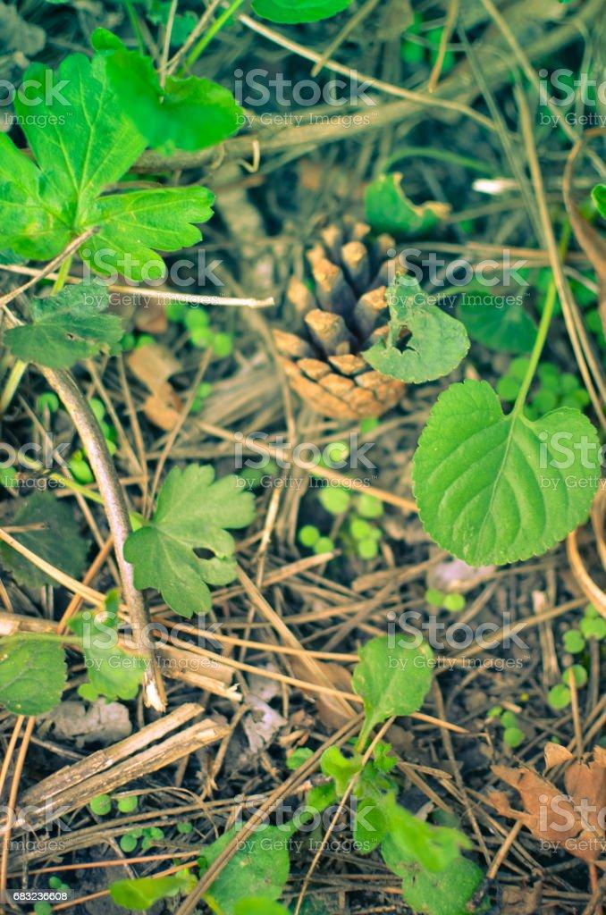파인에서 원뿔형 있는 잔디 배경기술 royalty-free 스톡 사진