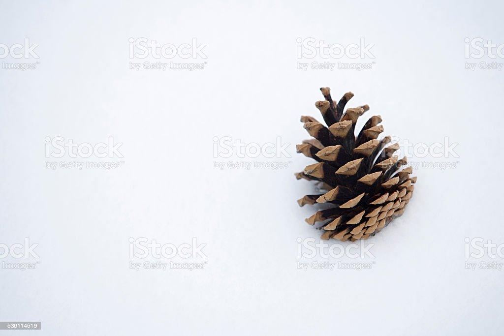 Pine cone in snow stock photo