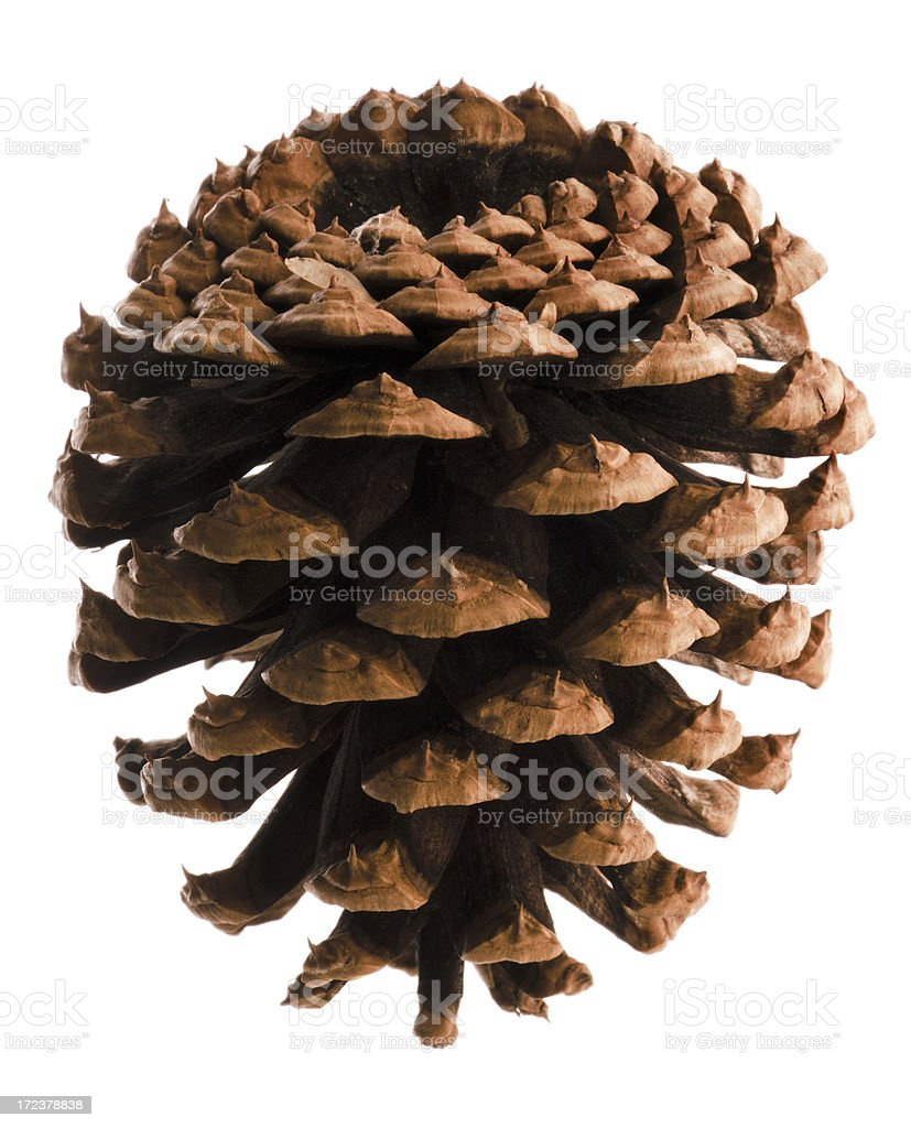 Pine Cone Isolated royalty-free stock photo