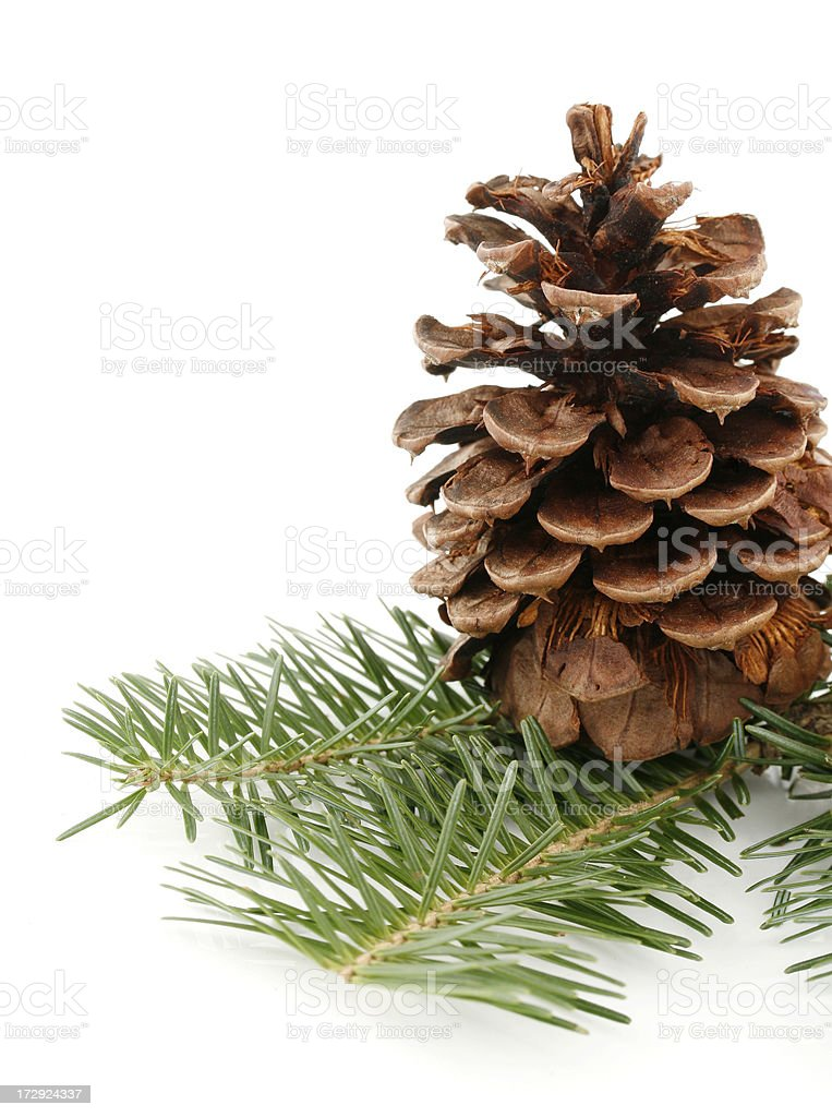 Pine Cone on White royalty-free stock photo