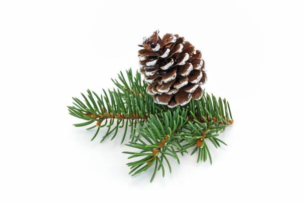 Cono de pino en blanco - foto de stock