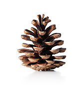 Pine cone on white background.
