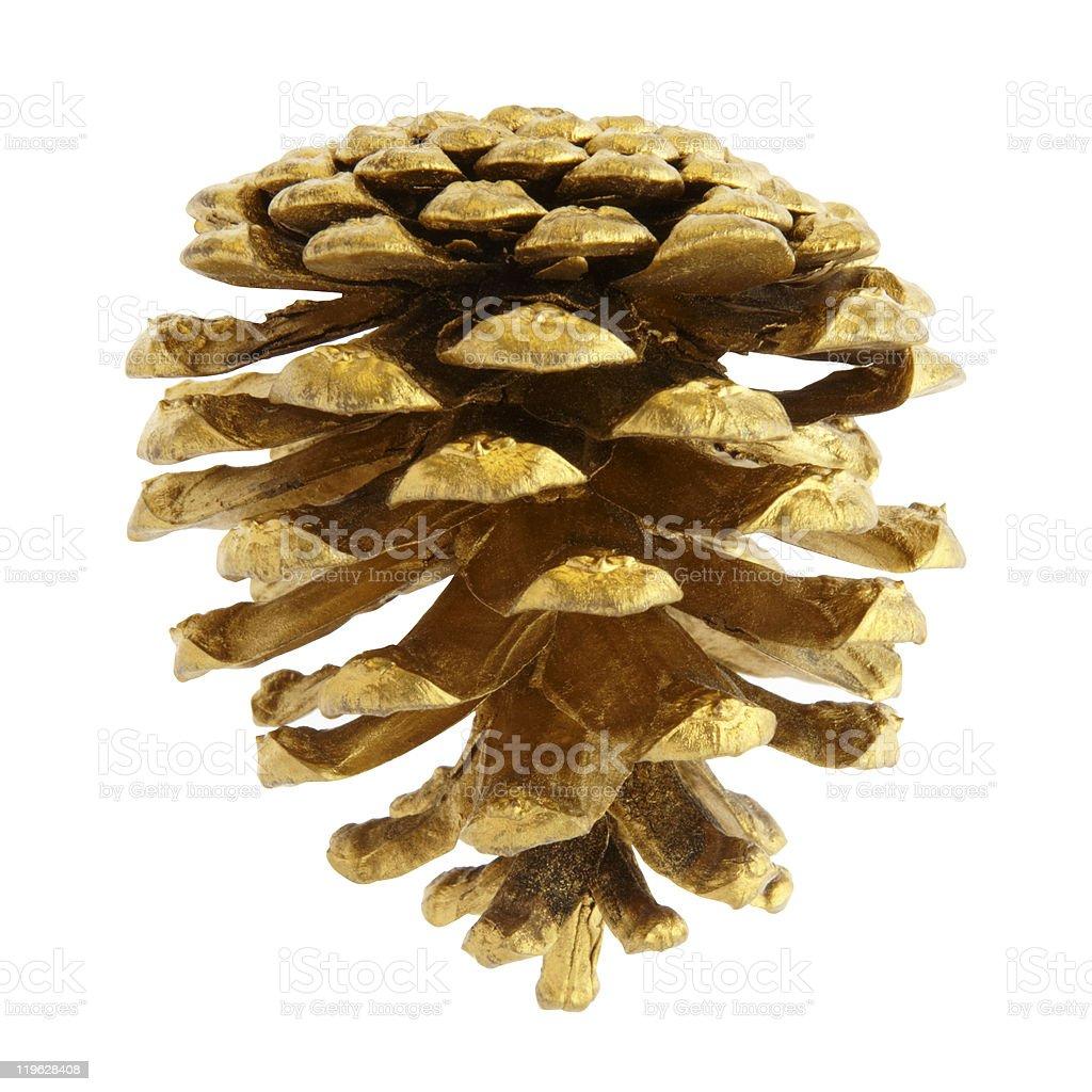 Pine cone stock photo