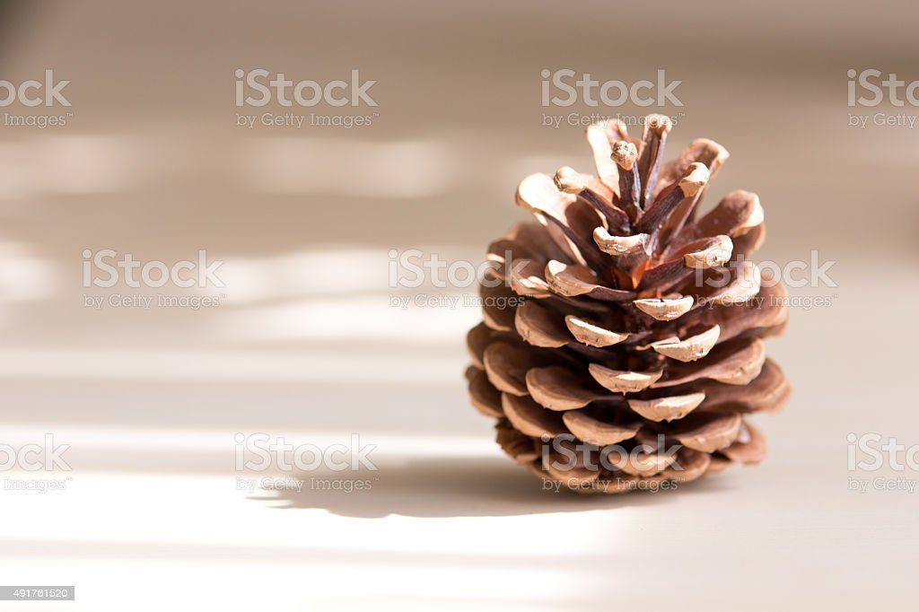 Pine cone on the table with deep of field