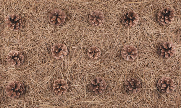 Pine cone seasonal background with copy space stock photo