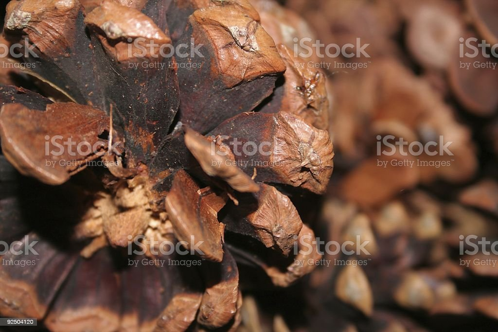 Pine Cone Texture royalty-free stock photo
