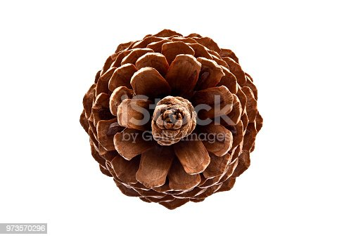 A pine cone imaged from the top on a white background.