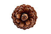 Pine Cone- Top View