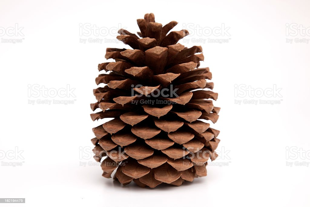 pine cone XXXL royalty-free stock photo
