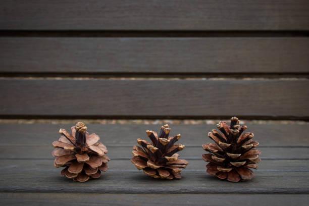 Pine cones background stock photo