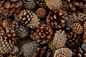 Wall-to-wall pine cones