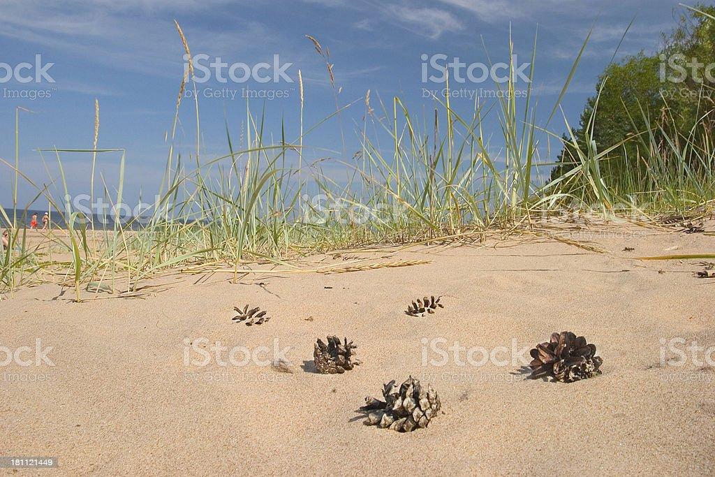 Pine Hütchen auf den Strand – Foto