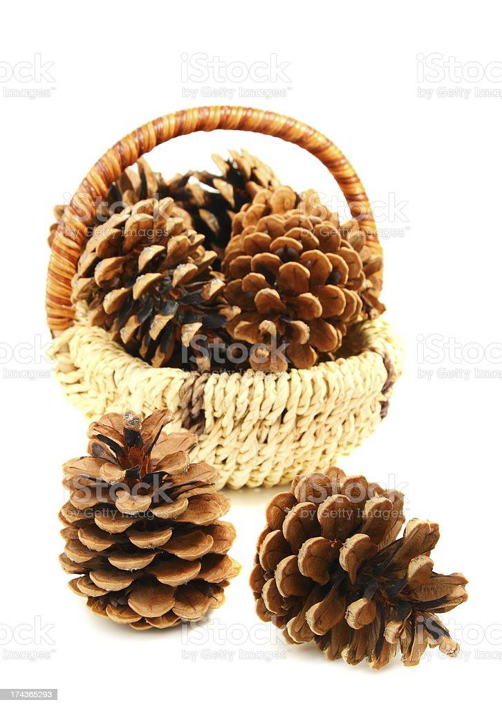 Pine cones. royalty-free stock photo