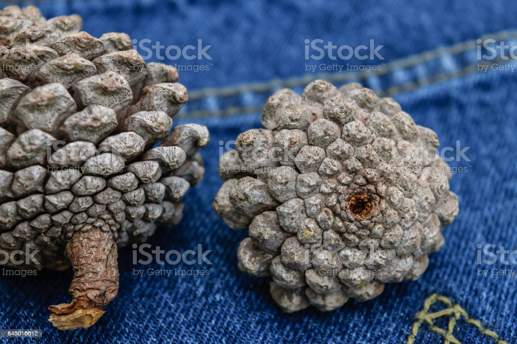 pine cones place on Jeans pants stock photo