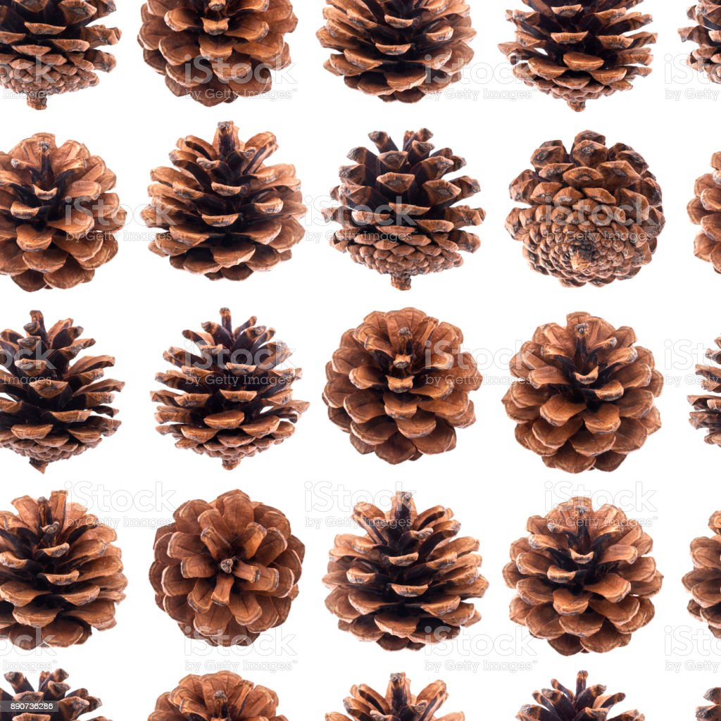 Pine cones seamless pattern, fir tree cones isolated on white background closeup stock photo