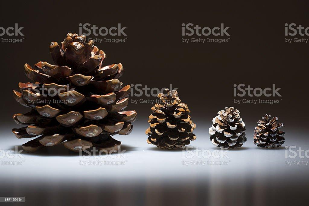 pine cones series with dark background stock photo