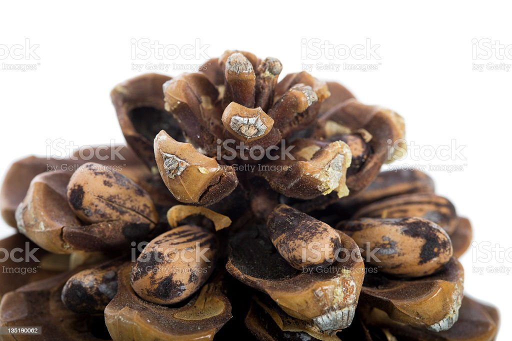 Pine cones with seed royalty-free stock photo