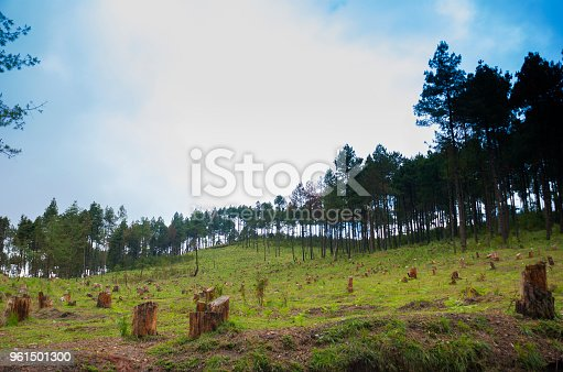istock Pine deforest cut down into a dry lifeless field in Guatemala. 961501300