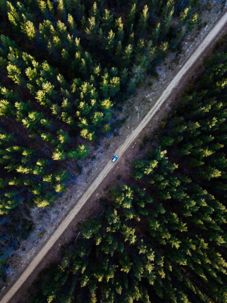 Pine Forest Aerial stock photo
