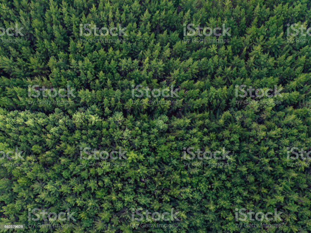 Pine Forest Aerial View. stock photo