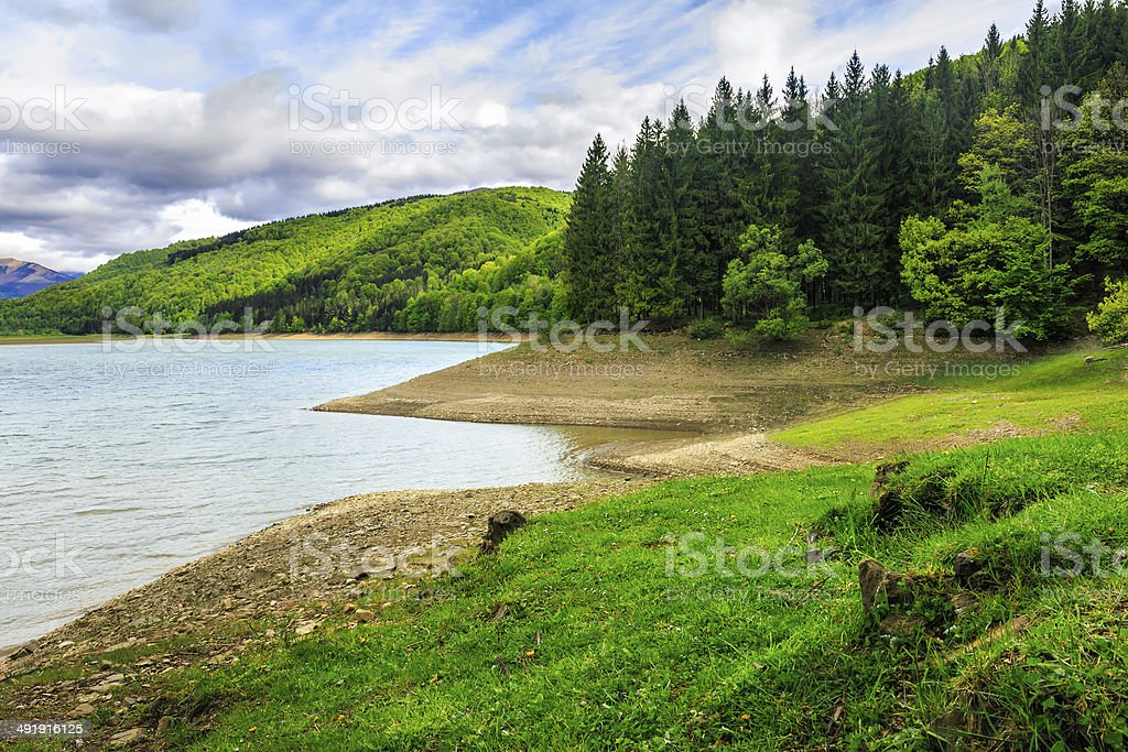 pine forest and lake near the mountain - Royalty-free Beach Stock Photo