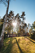 pine forest, blue sky, sunny summer day. View sunshine