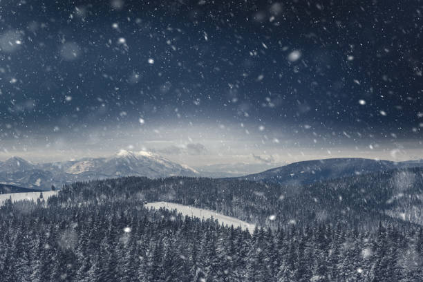 Pine Forest Covered With Snow stock photo