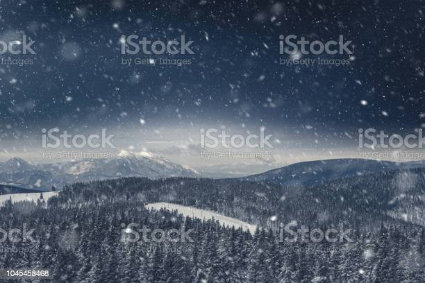 Photo of Pine Forest Covered With Snow