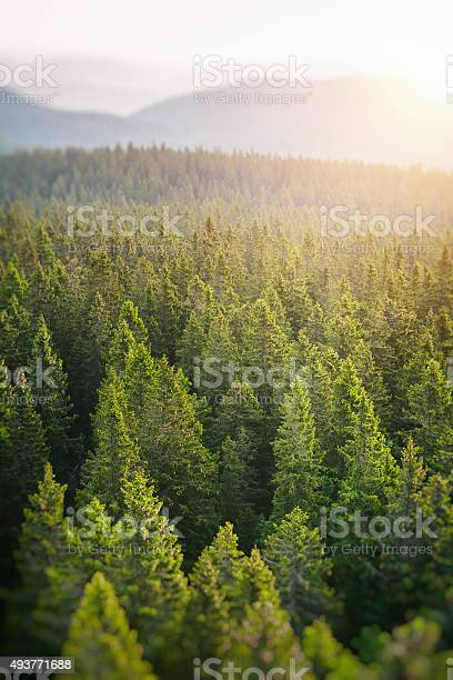 Photo of Pine Forest From Above