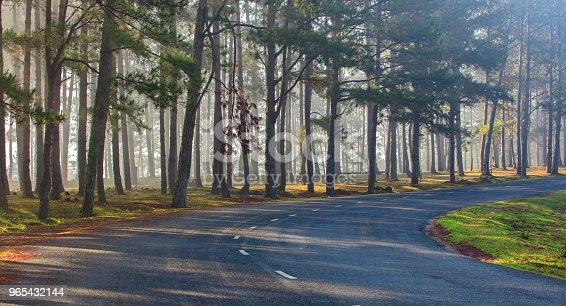 Pine Forest In Sunlight Stock Photo & More Pictures of Autumn