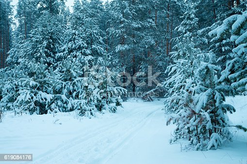 1061644120 istock photo Pine forest in winter covered with snow 619084176