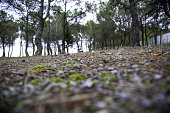 Natural pine forest, landscape and environment, climate change and hiking