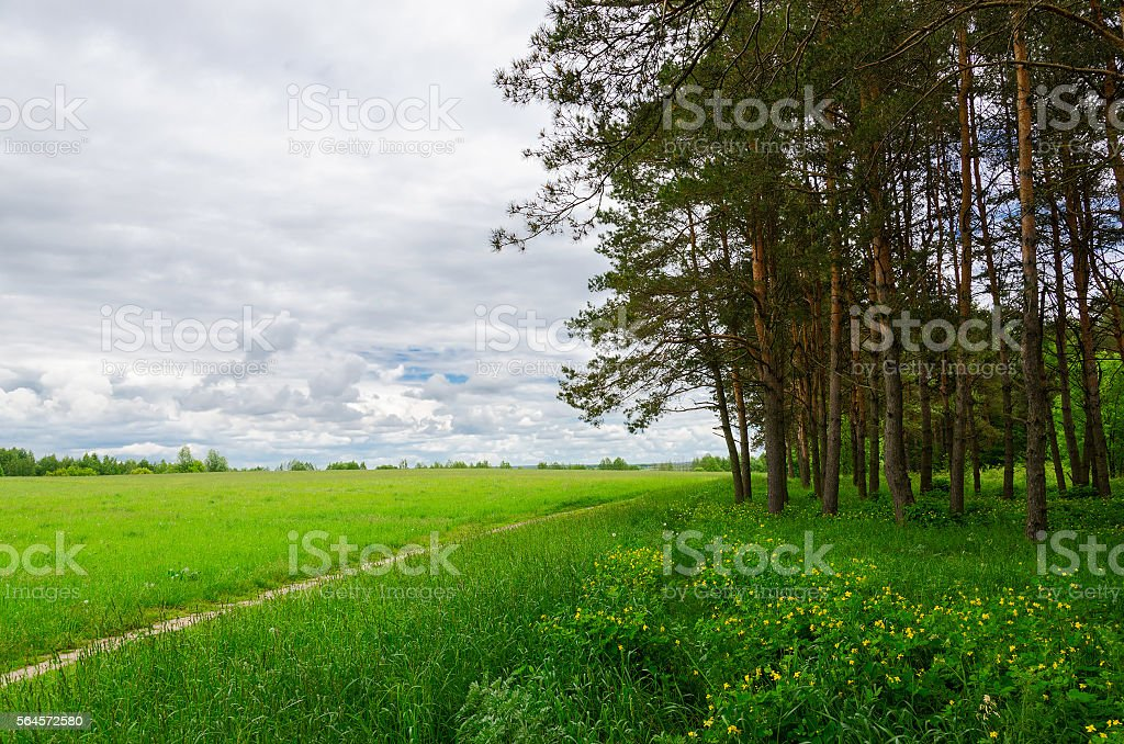 Pine forest near green field with footpath stock photo