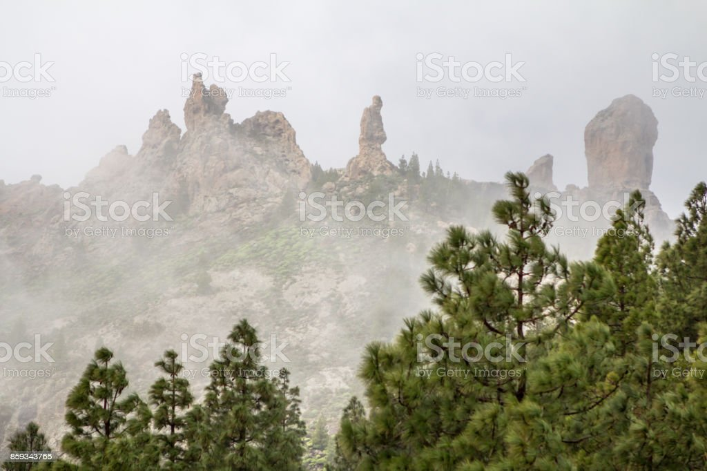Pine forest on canary islands stock photo