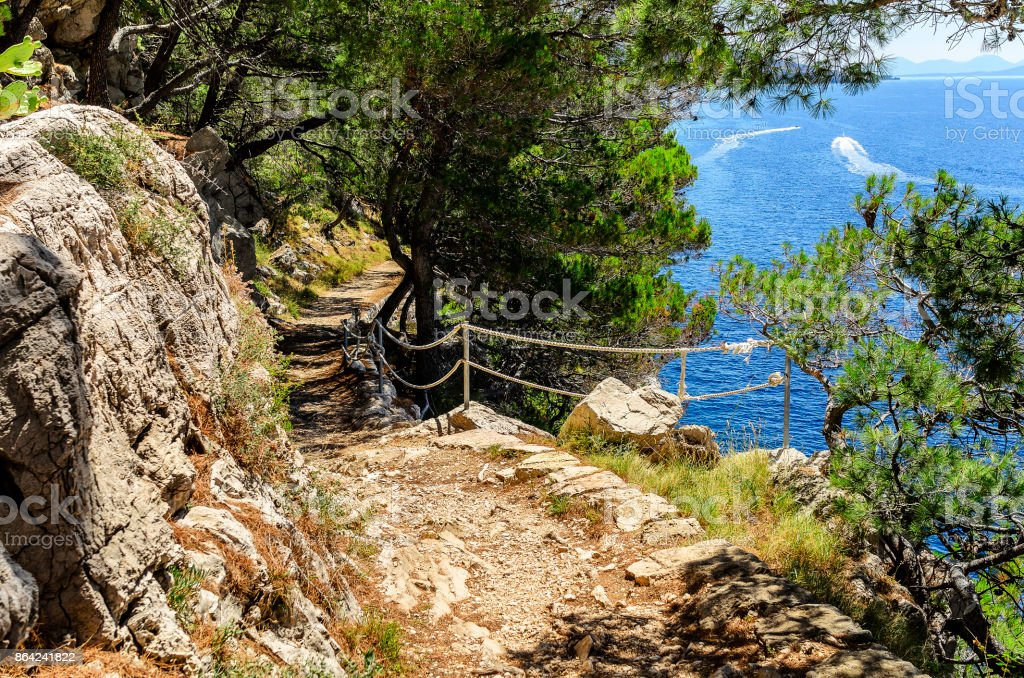 Pine forest on the sea coast royalty-free stock photo